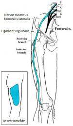 Meralgia Paresthetica beror på att nerven; nervus cutaneus femoralis lateralis kläms in. Nerven kan bland annat klämmas in under ett ligament som sträcker sig från utsidan av höften mot insidan av ditt höftben. Ligamentet heter ligament inguinale.