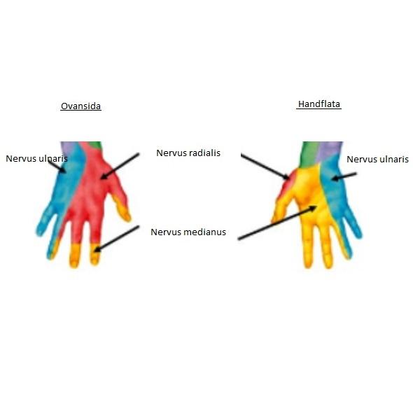 domningar i fingrar och armar