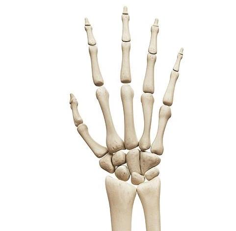 ont i handleden, anatomi